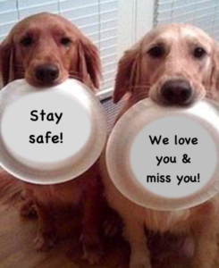 Two dogs saying stay safe